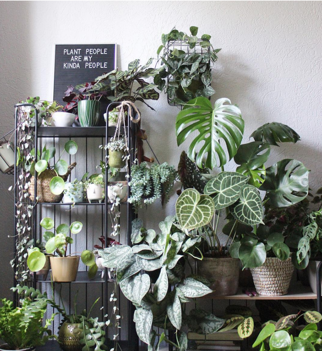 On Trend: House Plants